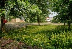 Rośliny i drzewa przed starymi domami wiejskimi i niedawno budującym mieszkaniem fotografia royalty free