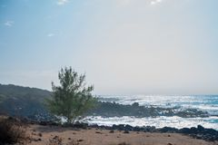 Rośliny i Hawaje pokojowy ocean brać w Oahu wyspie, Ameryka Fotografia Royalty Free