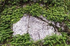 Rośliny i kamienna ściana - Irlandia zdjęcia stock