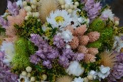 Rośliny i kwiatu suchy skład Obrazy Royalty Free