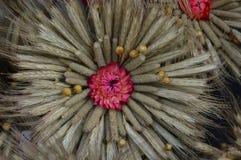 Rośliny i kwiatu suchy skład Fotografia Royalty Free