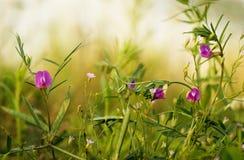 Rośliny i kwiaty pogodne łąki obraz royalty free