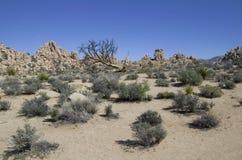 Rośliny i skały w Joshua drzewie NP Zdjęcia Royalty Free