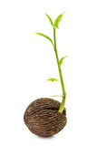 Rośliny kiełkowanie fotografia stock