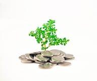 Rośliny kiełkowanie w monecie zdjęcie royalty free