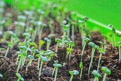 Rośliny kiełkowanie w ziemi obrazy stock