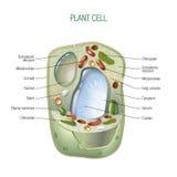 Rośliny komórka ilustracji