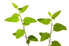 rośliny leśne Zdjęcia Royalty Free