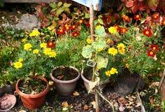 rośliny na kwiatu łóżku w garnkach i Zdjęcie Royalty Free