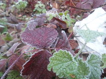 Rośliny na oszraniającym Zdjęcie Royalty Free