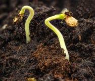 rośliny narastająca ziemia Obraz Royalty Free