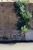 Rośliny obwieszenie w ścianie Zdjęcie Stock
