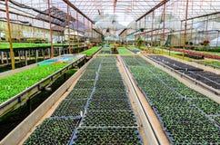 ROŚLINY pepiniera kwiaty I ORNAMENTACYJNE rośliny Zdjęcie Royalty Free