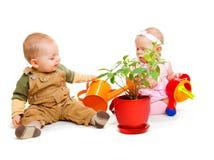 rośliny podlewanie Zdjęcia Stock