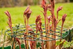 Rośliny poparcia grilles obraz stock