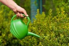 Rośliny potrzebują dobrą opiekę Zdjęcia Stock
