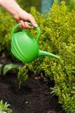 Rośliny potrzebują dobrą opiekę Obrazy Royalty Free