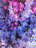 rośliny prodr kreda kwiaty obrazy royalty free