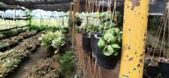Rośliny Przechują fotografia stock