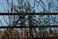 Rośliny przeciw rdzewiejącej bramie zdjęcia stock
