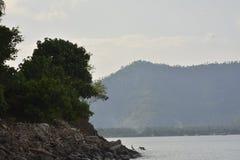 Rośliny przy Boracay plażą, Sta Maria, Davao Okcydentalny obrazy stock