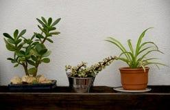 rośliny puszkują małego Obrazy Stock