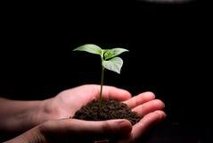 rośliny rąk gospodarstw Obraz Stock