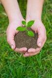 rośliny rąk ii Obraz Stock