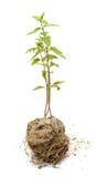 Rośliny r na ziemi Obrazy Stock