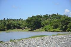 Rośliny Rosnąć W Riverbank Padada-Miral rzeka, Lapulabao, Hagonoy, Davao Del Sura, Filipiny obraz royalty free