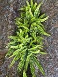 rośliny skała Obraz Royalty Free