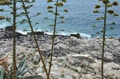 Rośliny, skały i morze, Obrazy Royalty Free