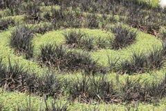 Rośliny spirala obrazy royalty free
