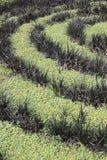 Rośliny spirala obrazy stock