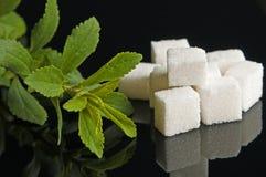 rośliny stevia cukier zdjęcie royalty free