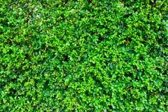 Rośliny tło Zdjęcie Stock