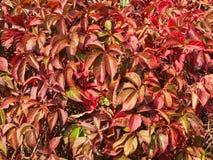 rośliny tekstura Fotografia Stock
