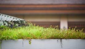 Rośliny trawy dach zdjęcia stock