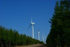 rośliny władzy wiatr obrazy stock