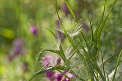 Rośliny w łące Fotografia Stock