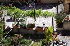 Rośliny w Arden - widok od above zdjęcia stock