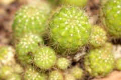 Rośliny w bibliotece zdjęcia stock
