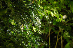 Rośliny w domu ogródzie nocą Obrazy Royalty Free