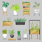 Rośliny w flowerpots wektorze puszkowali houseplants kaktusów salowego botanicznego aloesu dla domowej dekoraci z kwiecistą kolek ilustracja wektor