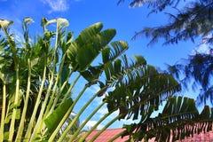Rośliny w hotelowym terenie, drzewa, Phra Ae plaża, Ko Lanta, Tajlandia Obraz Royalty Free