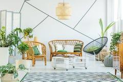 Rośliny w nowożytnym żywym pokoju Fotografia Stock