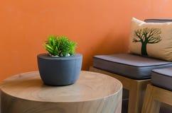 Rośliny w nowożytnym garnku na drewnianym stole Fotografia Stock