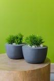 Rośliny w nowożytnym garnku na drewnianym stole Obrazy Stock