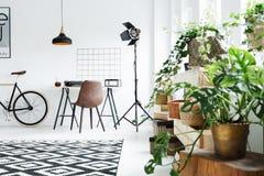 Rośliny w nowożytnym pokoju Fotografia Stock