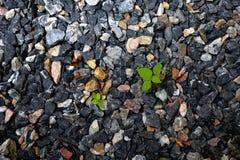 Rośliny w skałach Fotografia Royalty Free